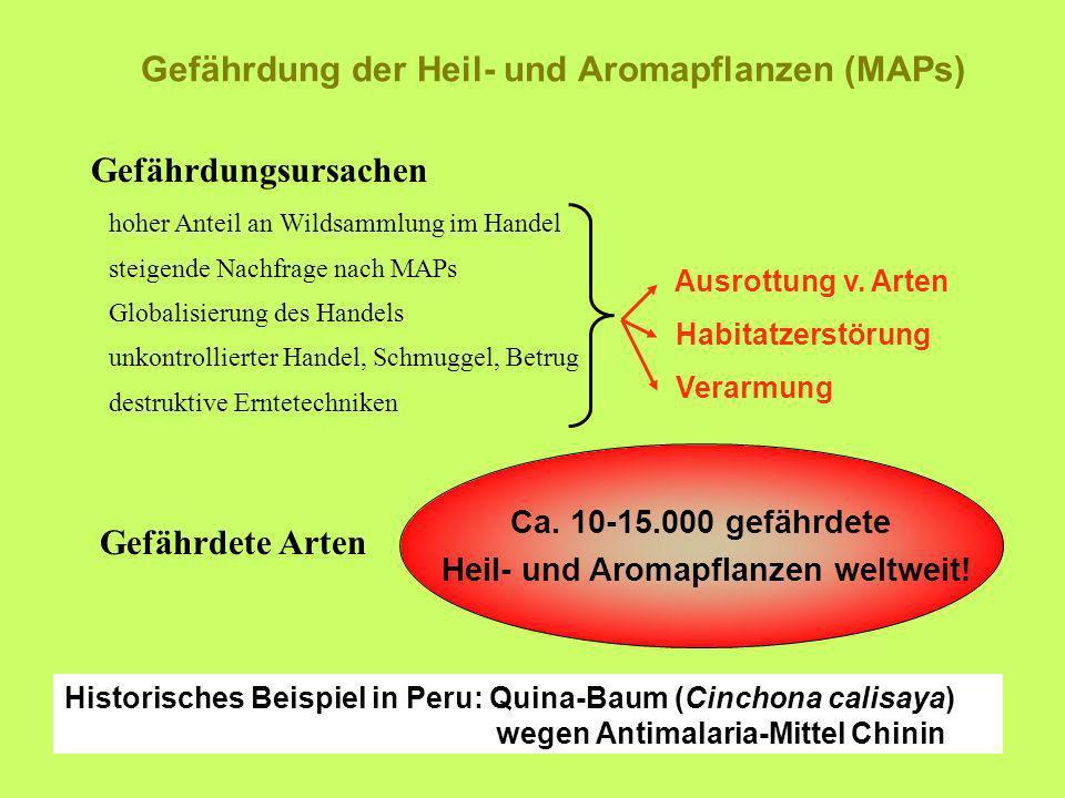 Gefährdungsursachen Gefährdung der Heil- und Aromapflanzen (MAPs) Ausrottung v. Arten Habitatzerstörung Verarmung hoher Anteil an Wildsammlung im Hand