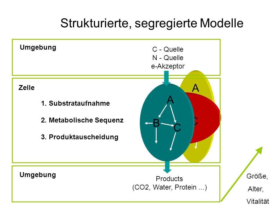 A B C A B C Strukturierte, segregierte Modelle C - Quelle N - Quelle e-Akzeptor 1. Substrataufnahme 2. Metabolische Sequenz 3. Produktauscheidung Prod