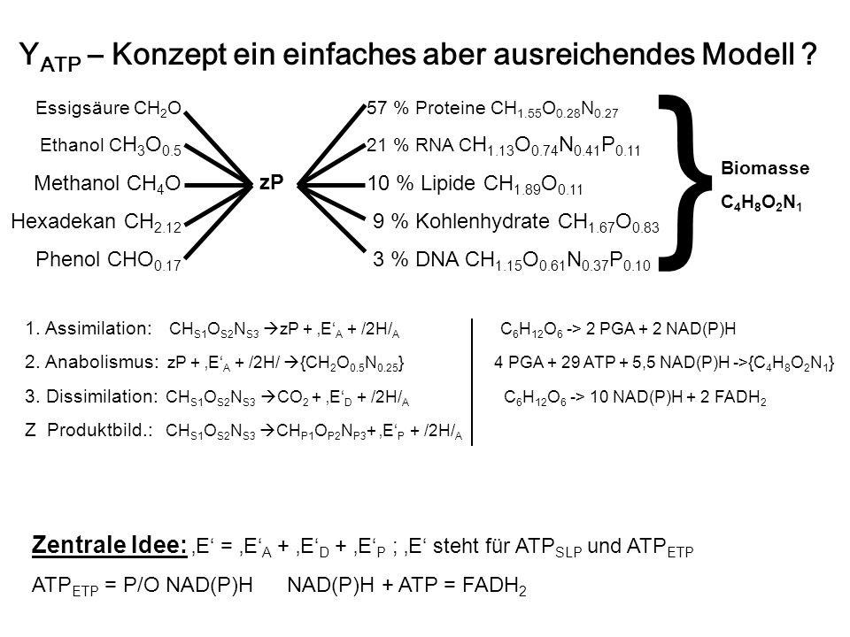 Y ATP – Konzept ein einfaches aber ausreichendes Modell ? Biomasse C 4 H 8 O 2 N 1 zP 57 % Proteine CH 1.55 O 0.28 N 0.27 21 % RNA C H 1.13 O 0.74 N 0