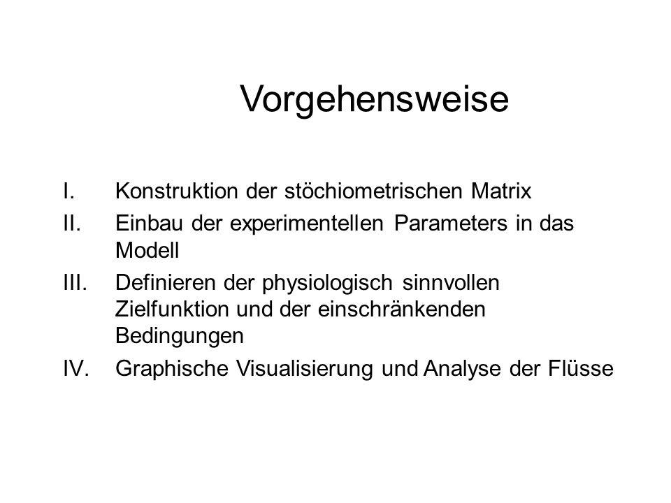 Vorgehensweise I.Konstruktion der stöchiometrischen Matrix II.Einbau der experimentellen Parameters in das Modell III.Definieren der physiologisch sin