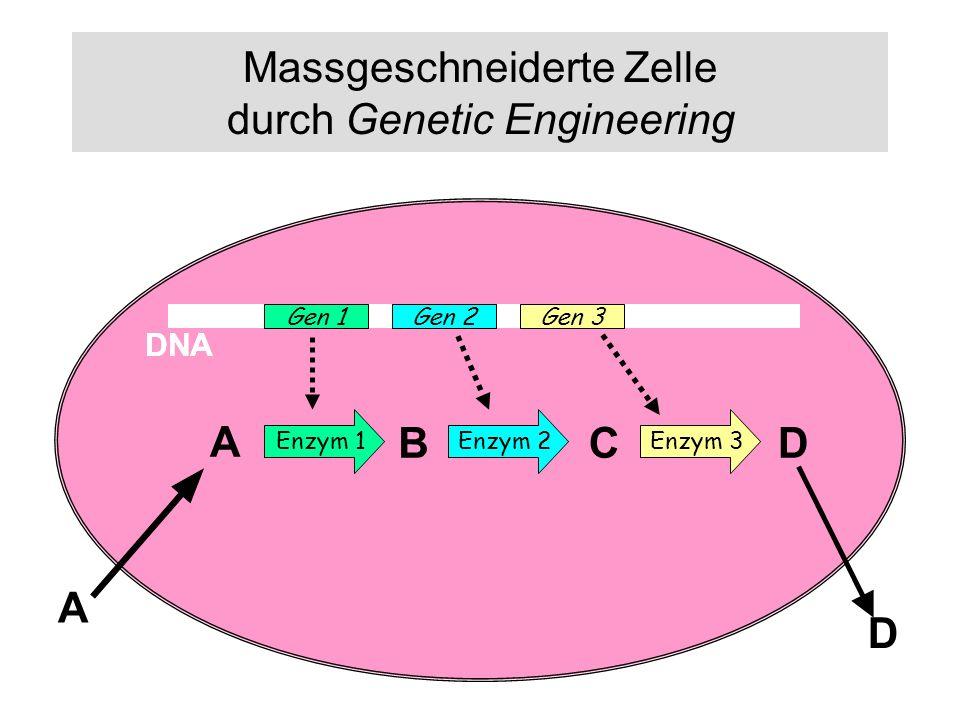 Massgeschneiderte Zelle durch Genetic Engineering DNA Gen 1Gen 2Gen 3 Enzym 1 Enzym 2 Enzym 3 A BCD A DNA D