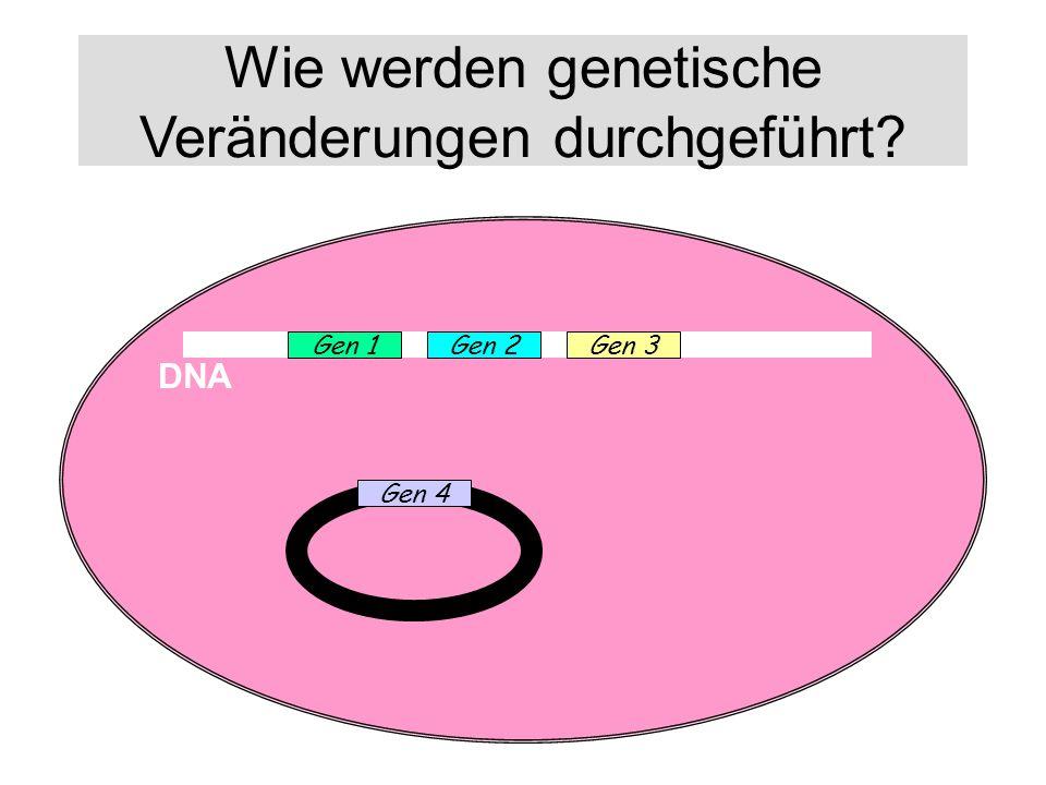 Wie werden genetische Veränderungen durchgeführt? DNA Gen 1Gen 2Gen 3 Gen 4
