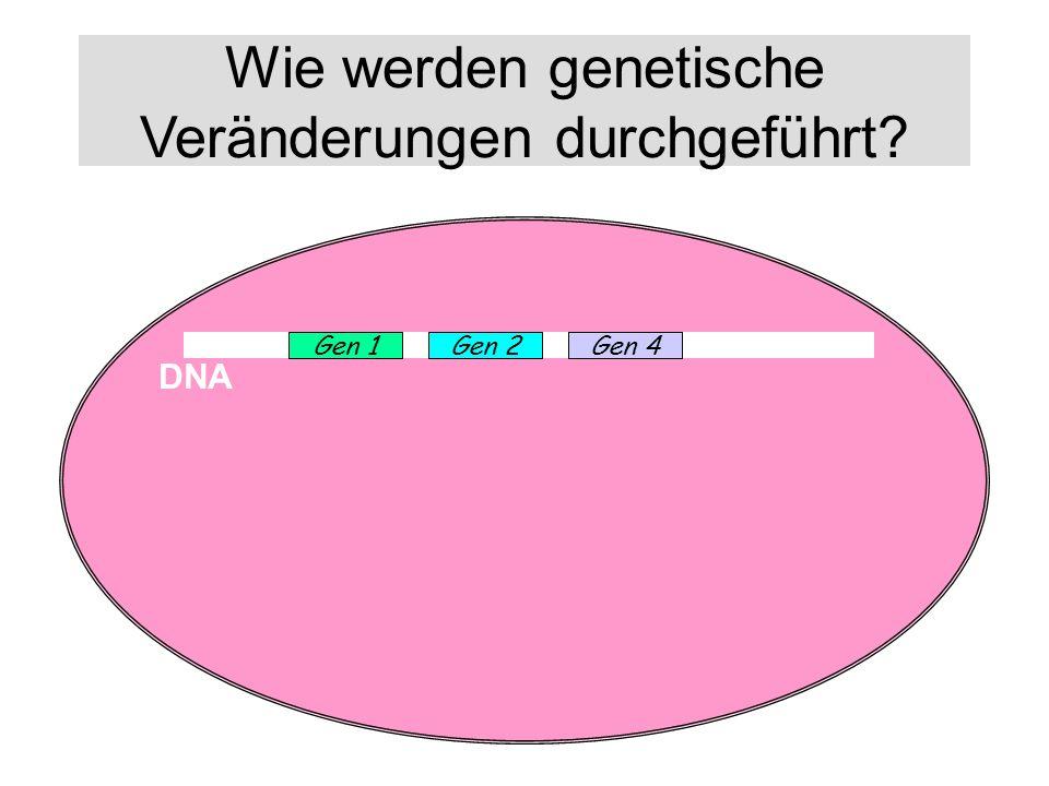 Wie werden genetische Veränderungen durchgeführt? DNA Gen 1Gen 2Gene 3Gen 4