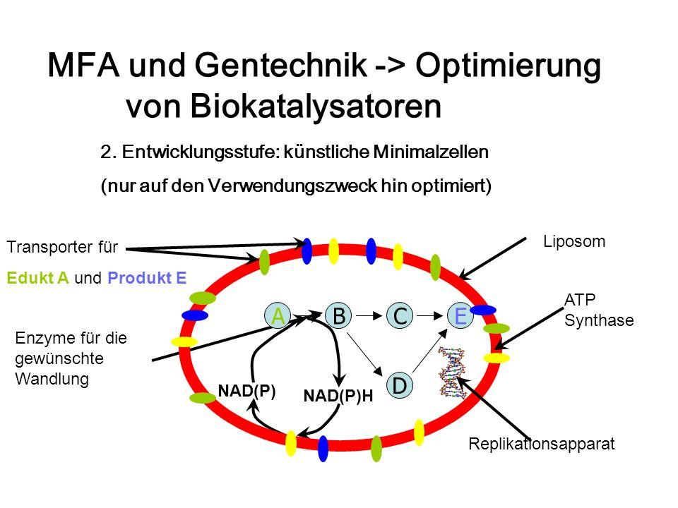 MFA und Gentechnik -> Optimierung von Biokatalysatoren 2. Entwicklungsstufe: künstliche Minimalzellen (nur auf den Verwendungszweck hin optimiert) Lip