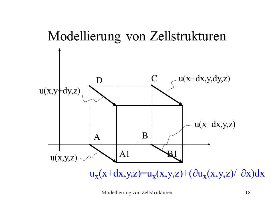 Modellierung von Zellstrukturen18 Modellierung von Zellstrukturen B C A A1B1 D u(x+dx,y,dy,z) u(x+dx,y,z) u(x,y+dy,z) u(x,y,z) u x (x+dx,y,z)=u x (x,y