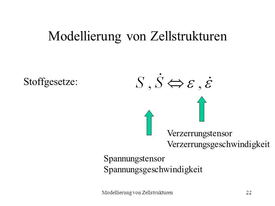 Modellierung von Zellstrukturen22 Modellierung von Zellstrukturen Stoffgesetze: Spannungstensor Spannungsgeschwindigkeit Verzerrungstensor Verzerrungs