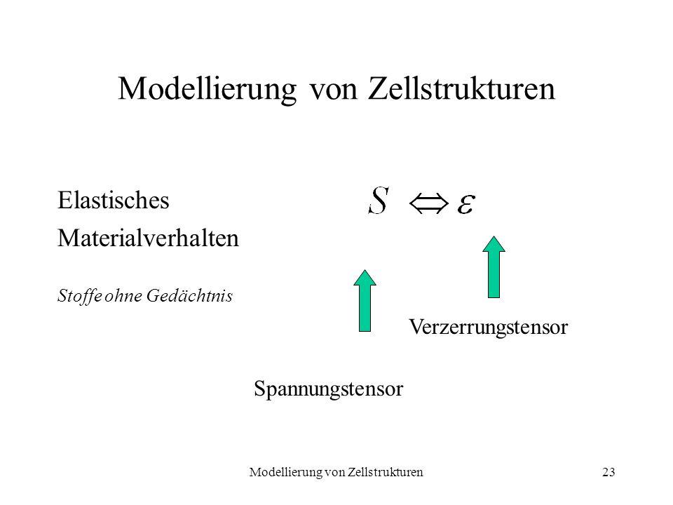 Modellierung von Zellstrukturen23 Modellierung von Zellstrukturen Elastisches Materialverhalten Stoffe ohne Gedächtnis Spannungstensor Verzerrungstens
