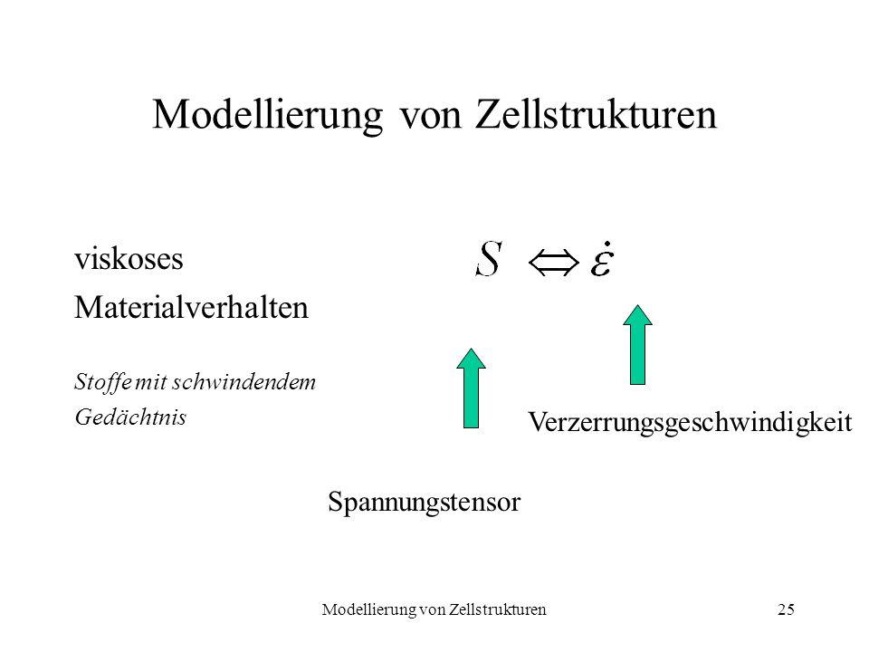 Modellierung von Zellstrukturen25 Modellierung von Zellstrukturen viskoses Materialverhalten Stoffe mit schwindendem Gedächtnis Spannungstensor Verzer