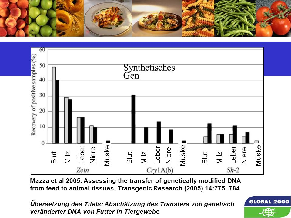 51 Mazza et al 2005: Assessing the transfer of genetically modified DNA from feed to animal tissues. Transgenic Research (2005) 14:775–784 Übersetzung