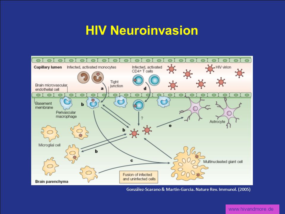 www.hivandmore.de HIV Neuroinvasion González-Scarano & Martin-Garcia. Nature Rev. Immunol. (2005)