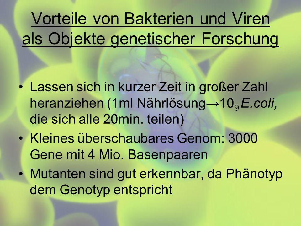 Vorteile von Bakterien und Viren als Objekte genetischer Forschung Lassen sich in kurzer Zeit in großer Zahl heranziehen (1ml Nährlösung10 9 E.coli, d