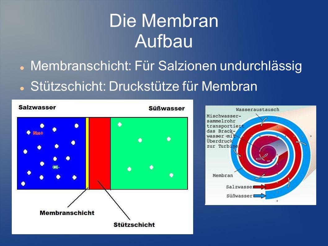 Die Membran Aufbau Membranschicht: Für Salzionen undurchlässig Stützschicht: Druckstütze für Membran