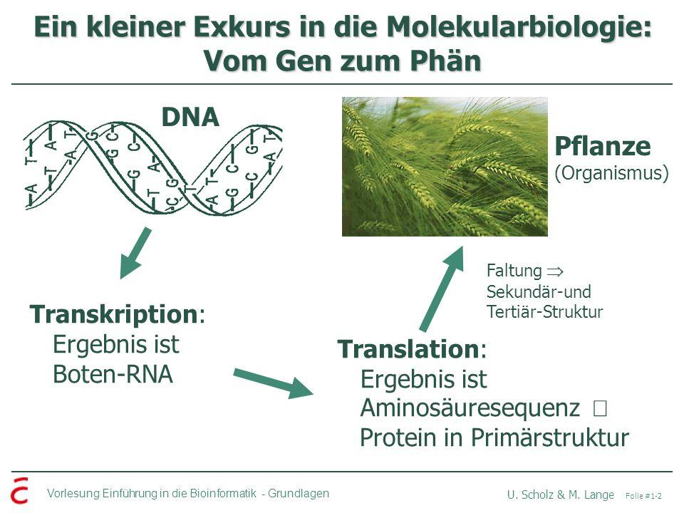 Vorlesung Einführung in die Bioinformatik -Grundlagen U. Scholz & M. Lange Folie #1-2 Ein kleiner Exkurs in die Molekularbiologie: Vom Gen zum Phän DN
