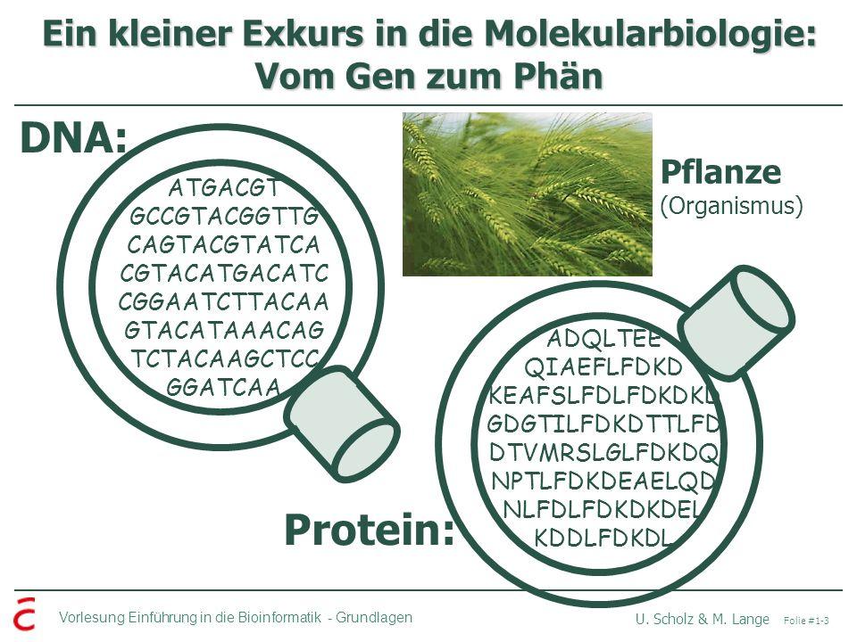 Vorlesung Einführung in die Bioinformatik -Grundlagen U. Scholz & M. Lange Folie #1-3 Ein kleiner Exkurs in die Molekularbiologie: Vom Gen zum Phän AT
