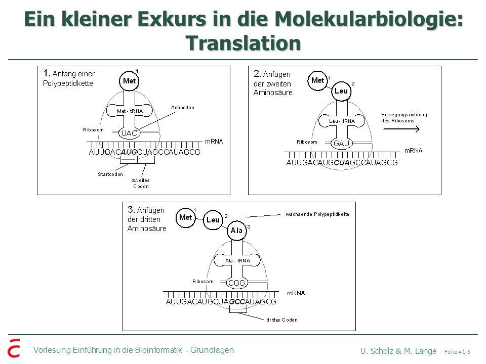 Vorlesung Einführung in die Bioinformatik -Grundlagen U. Scholz & M. Lange Folie #1-5 Ein kleiner Exkurs in die Molekularbiologie: Translation