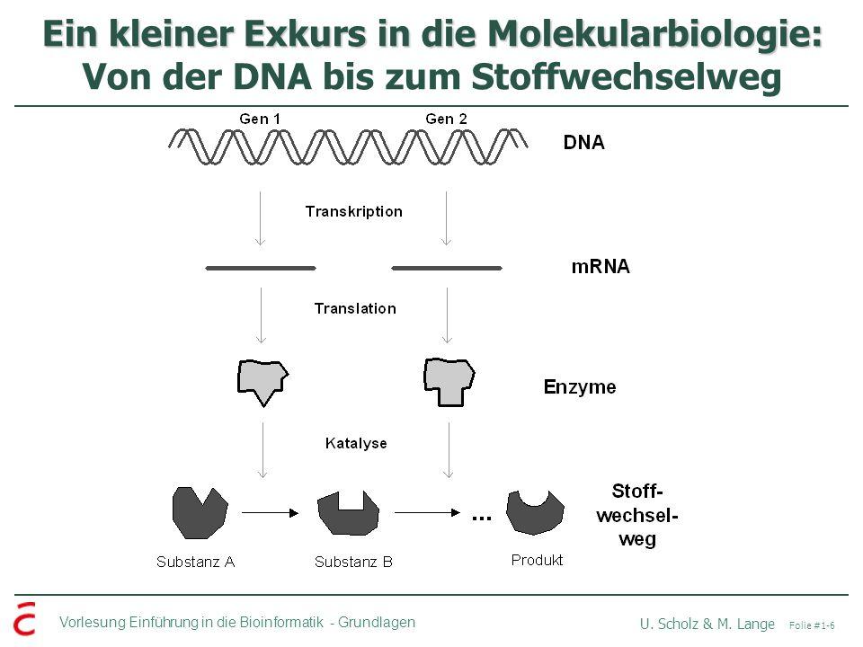 Vorlesung Einführung in die Bioinformatik -Grundlagen U. Scholz & M. Lange Folie #1-6 Ein kleiner Exkurs in die Molekularbiologie: Ein kleiner Exkurs