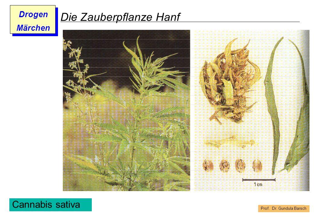 Prof. Dr. Gundula Barsch Drogen Märchen Die Zauberpflanze Hanf Cannabis sativa