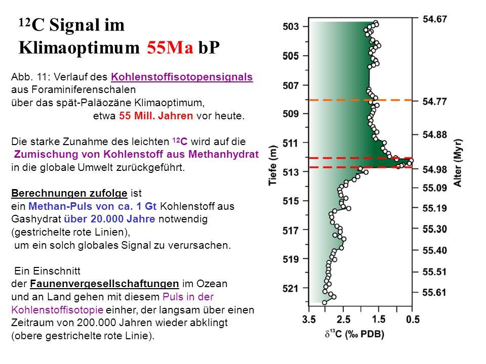Abb. 11: Verlauf des Kohlenstoffisotopensignals aus Foraminiferenschalen über das spät-Paläozäne Klimaoptimum, etwa 55 Mill. Jahren vor heute. Die sta