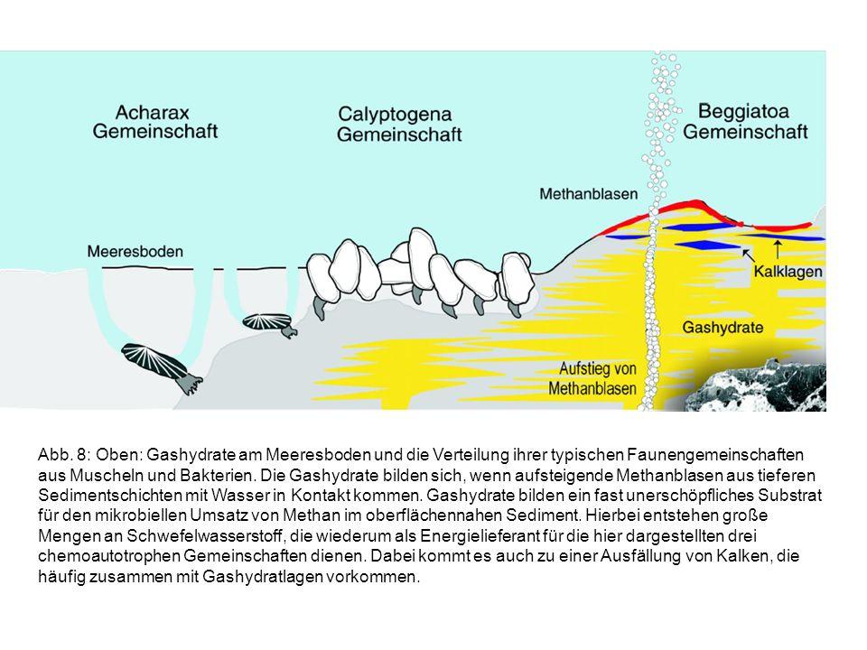 Abb. 8: Oben: Gashydrate am Meeresboden und die Verteilung ihrer typischen Faunengemeinschaften aus Muscheln und Bakterien. Die Gashydrate bilden sich