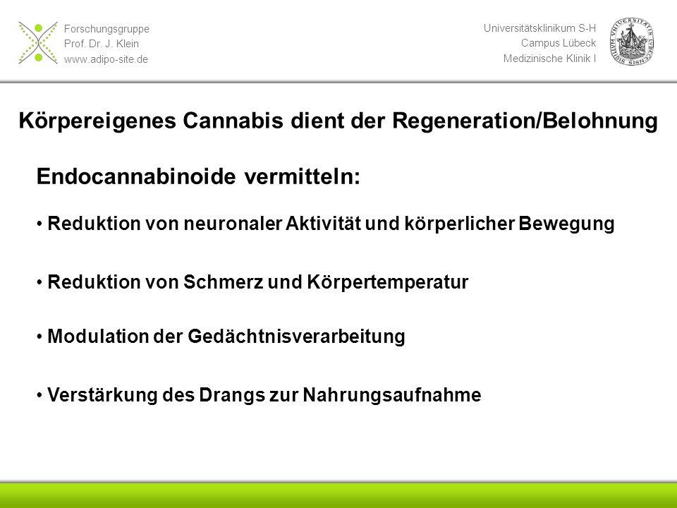 Forschungsgruppe Prof. Dr. J. Klein www.adipo-site.de Universitätsklinikum S-H Campus Lübeck Medizinische Klinik I Endocannabinoide vermitteln: Redukt