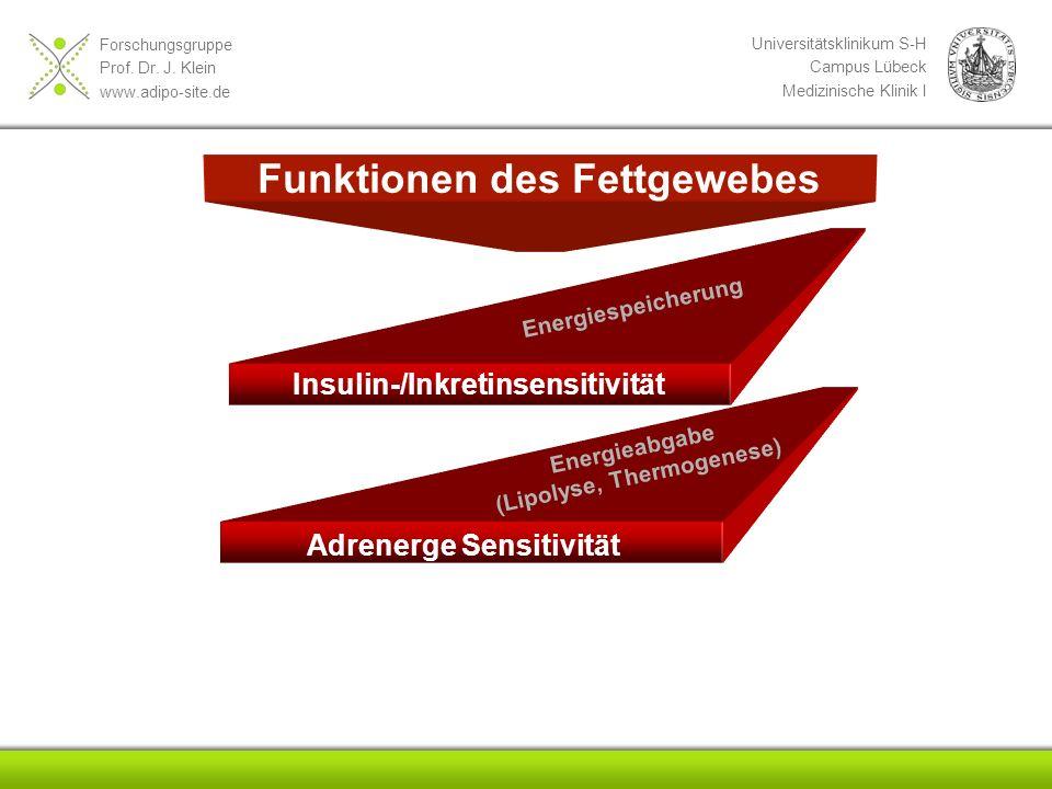 Forschungsgruppe Prof. Dr. J. Klein www.adipo-site.de Universitätsklinikum S-H Campus Lübeck Medizinische Klinik I Funktionen des Fettgewebes Insulin-