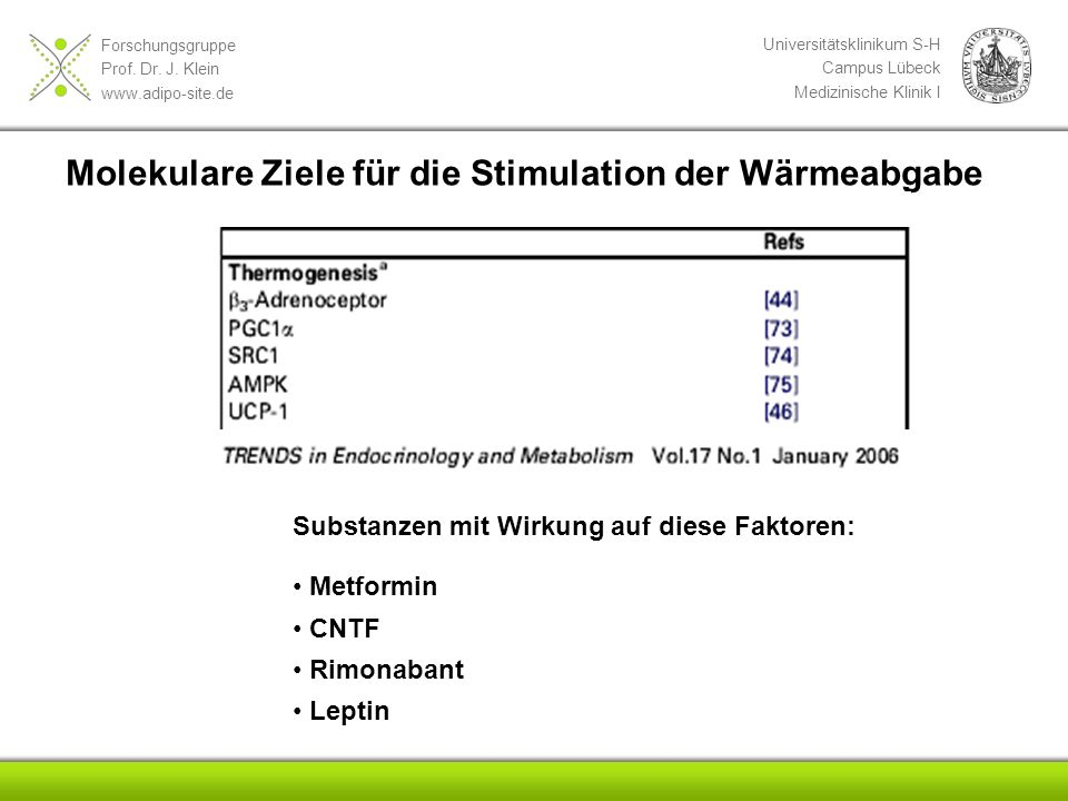 Forschungsgruppe Prof. Dr. J. Klein www.adipo-site.de Universitätsklinikum S-H Campus Lübeck Medizinische Klinik I Molekulare Ziele für die Stimulatio