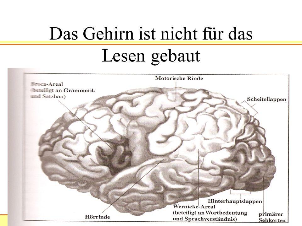 xxxxxxxxxxxxxxx 9 Das Gehirn ist nicht für das Lesen gebaut