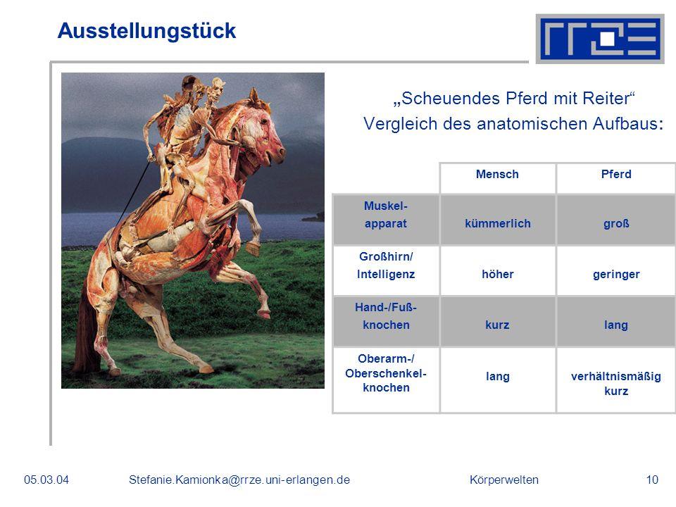 Körperwelten05.03.04Stefanie.Kamionka@rrze.uni-erlangen.de10 Ausstellungstück Scheuendes Pferd mit Reiter Vergleich des anatomischen Aufbaus : MenschP