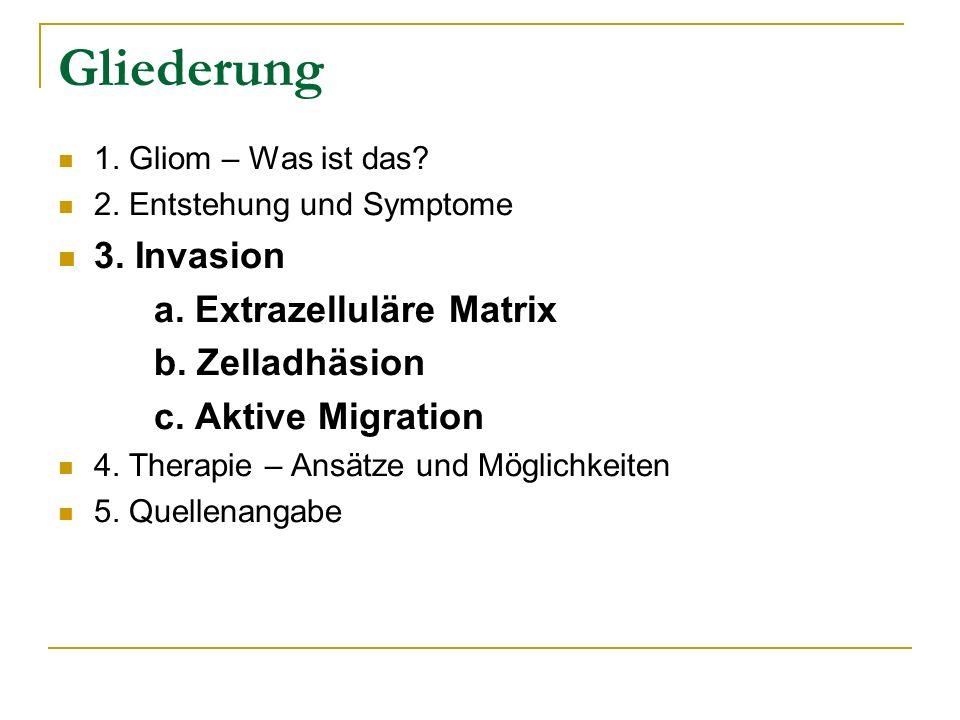 Gliederung 1. Gliom – Was ist das? 2. Entstehung und Symptome 3. Invasion a. Extrazelluläre Matrix b. Zelladhäsion c. Aktive Migration 4. Therapie – A