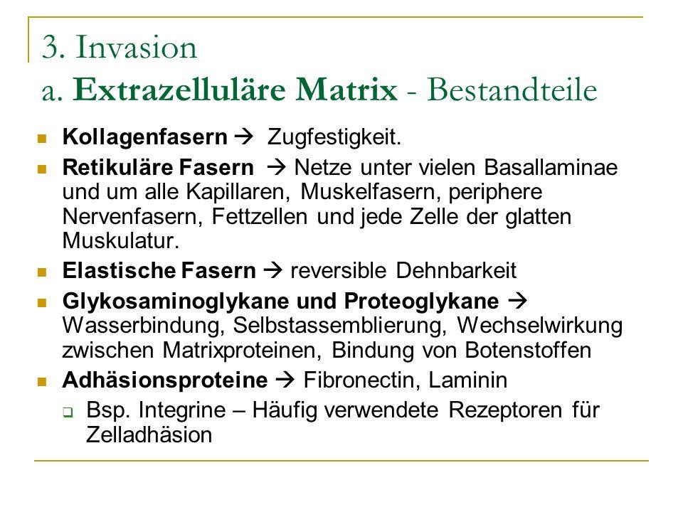 3. Invasion a. Extrazelluläre Matrix - Bestandteile Kollagenfasern Zugfestigkeit. Retikuläre Fasern Netze unter vielen Basallaminae und um alle Kapill