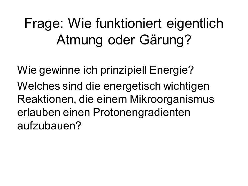 Generelles Prinzip der Energiegewinnung Substrat red Substrat ox Produkt oxProdukt red H Oxidierender Ast Reduzierender Ast