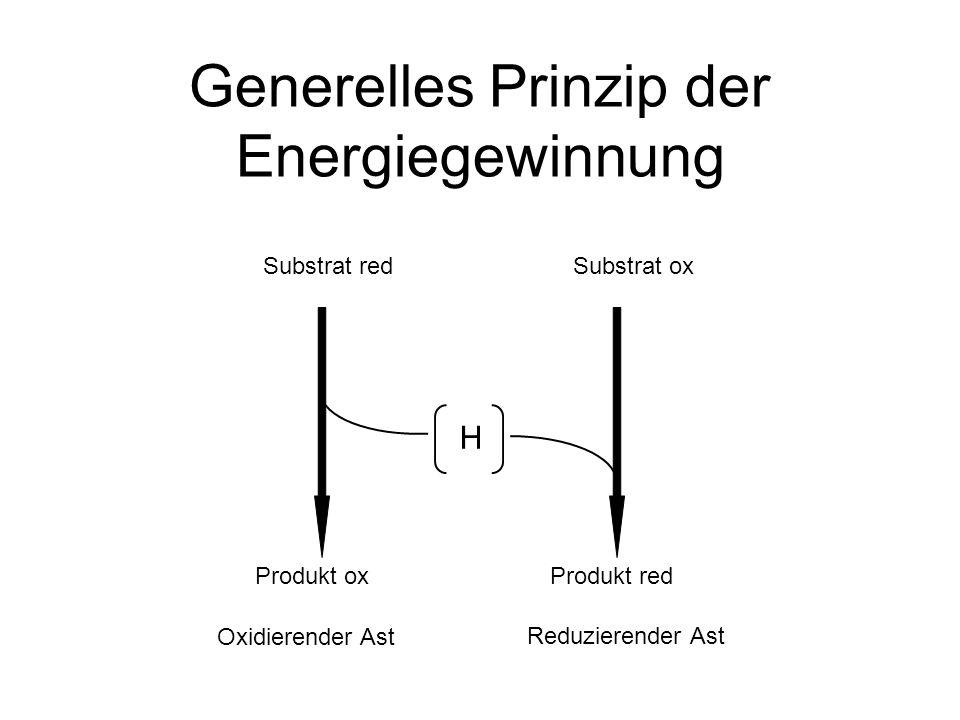 Beispiel Glukose und Sauerstoff Glc O2O2 CO 2 H2OH2O H ADP + P i ATP ADP + P i ATP