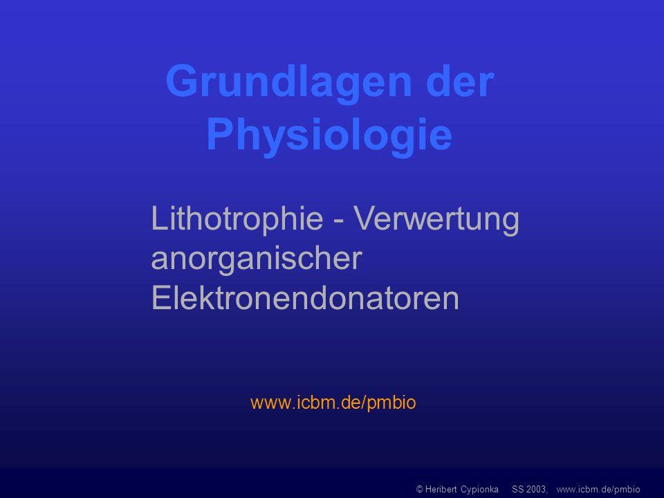 © Heribert Cypionka SS 2003, www.icbm.de/pmbio Biologische Reaktionen von molekularem Sauerstoff Photosynthetische Wasserspaltung Lichtenergie 2 H 2 O O 2 + 4 [H] Oxidase-Reaktionen (O 2 reduziert zu Wasser oder Wasserstoffperoxid) Cytochrom-Oxidase O 2 + 4 [H] 2 H 2 O Oxygenase-Reaktionen (O 2 eingebaut in schwer angreifbares Molekül, z.B.