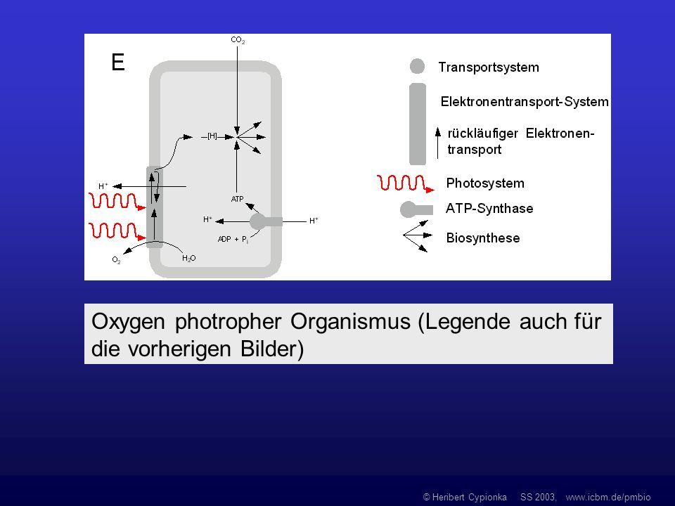 © Heribert Cypionka SS 2003, www.icbm.de/pmbio Oxygen photropher Organismus (Legende auch für die vorherigen Bilder)
