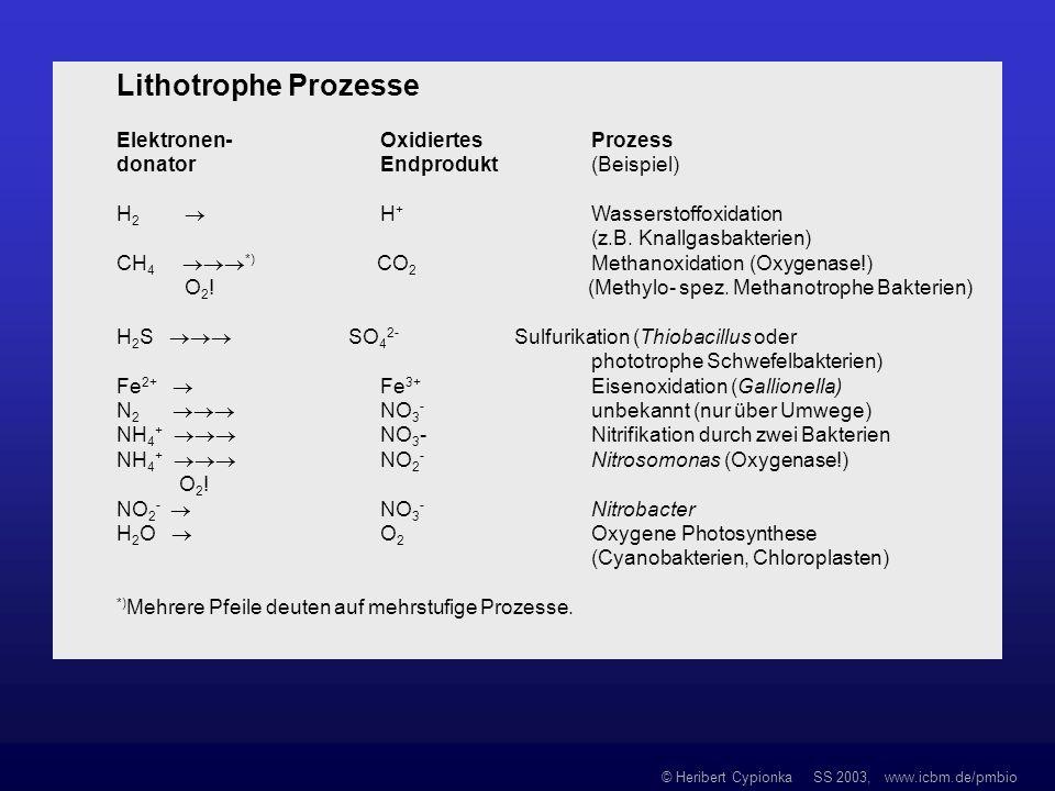 © Heribert Cypionka SS 2003, www.icbm.de/pmbio Lithotrophe Prozesse Elektronen- Oxidiertes Prozess donator Endprodukt (Beispiel) H 2 H + Wasserstoffox