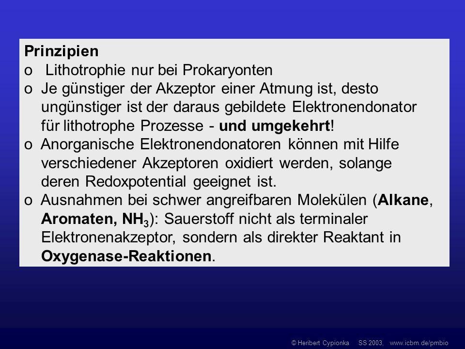 © Heribert Cypionka SS 2003, www.icbm.de/pmbio Prinzipien o Lithotrophie nur bei Prokaryonten o Je günstiger der Akzeptor einer Atmung ist, desto ungü
