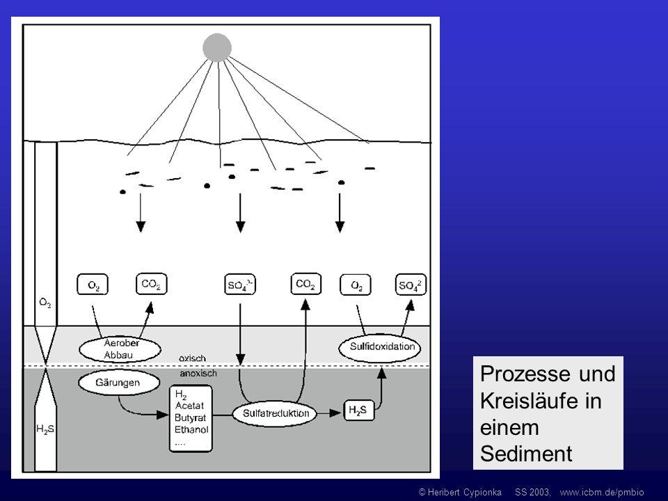 © Heribert Cypionka SS 2003, www.icbm.de/pmbio Prozesse und Kreisläufe in einem Sediment