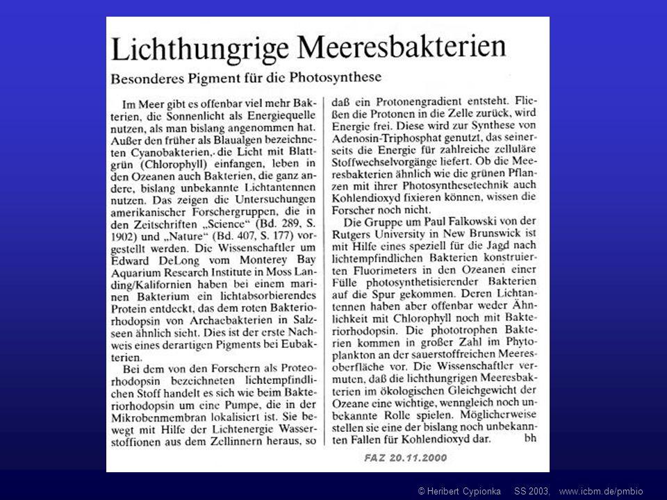 © Heribert Cypionka SS 2003, www.icbm.de/pmbio