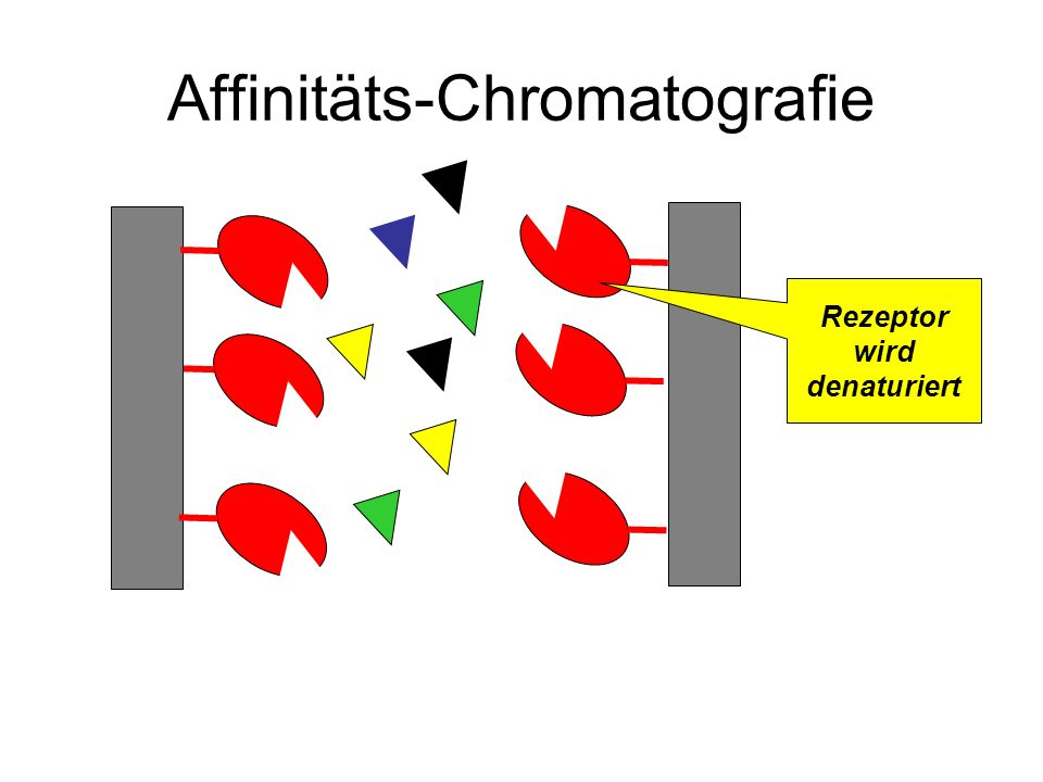 Affinitäts-Chromatografie Rezeptor wird denaturiert