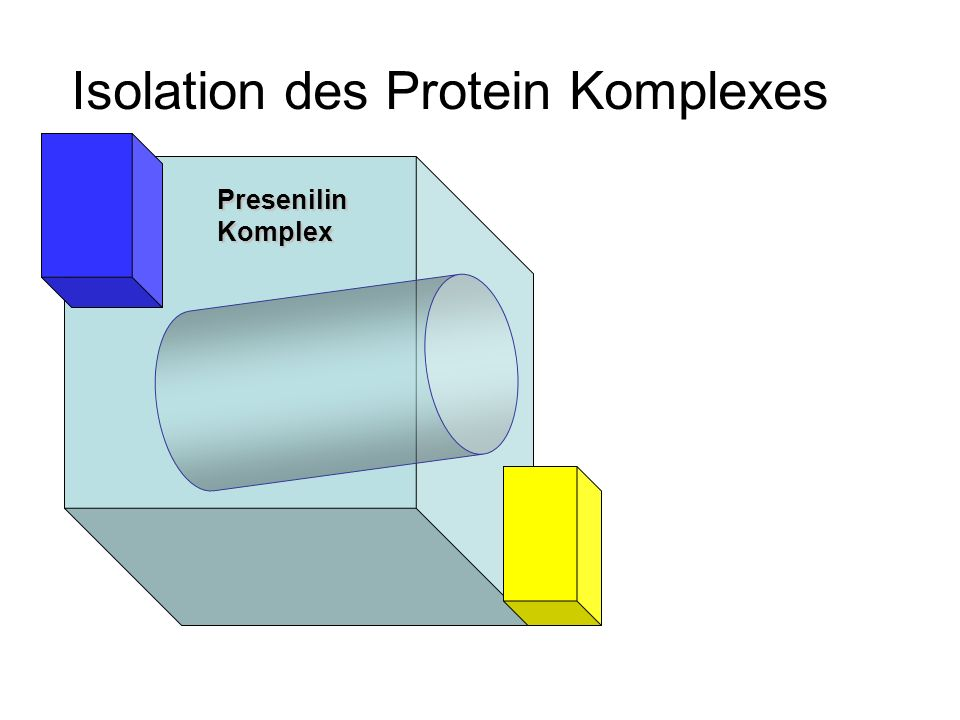 Isolation des Protein Komplexes PresenilinKomplex