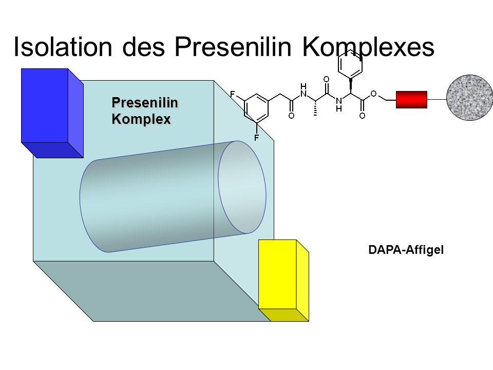 Isolation des Presenilin Komplexes DAPA-Affigel PresenilinKomplex