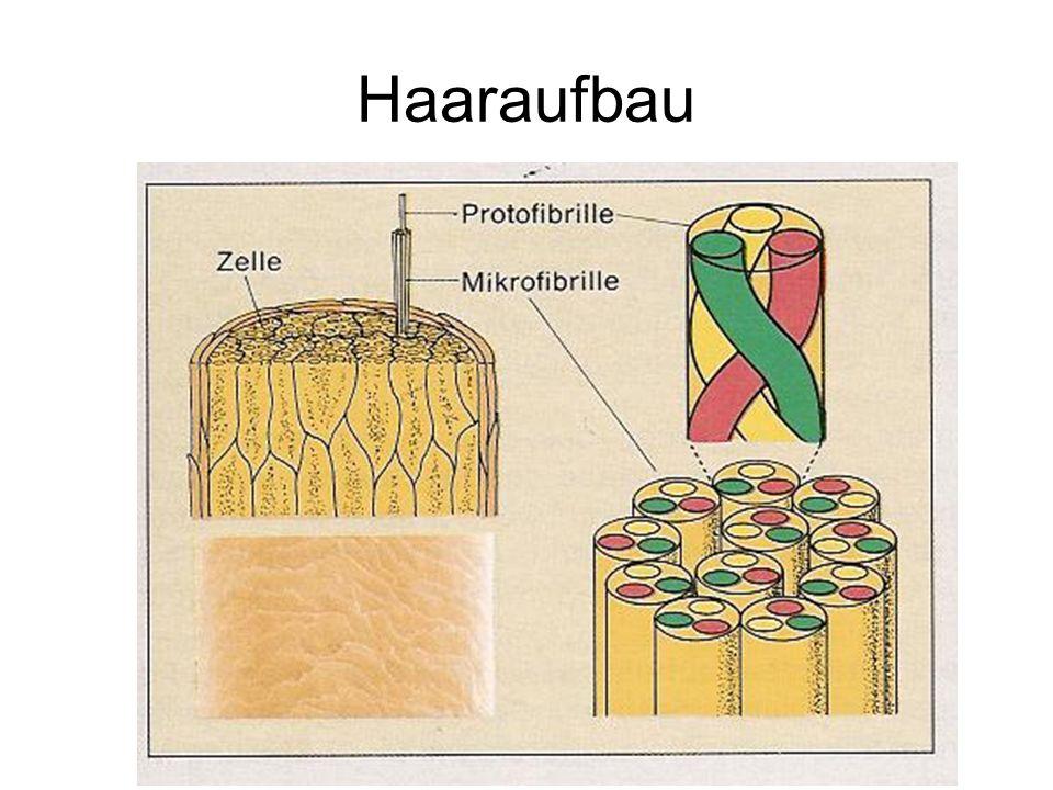 3x -Keratin -helikale Proteinstränge helikal verwunden