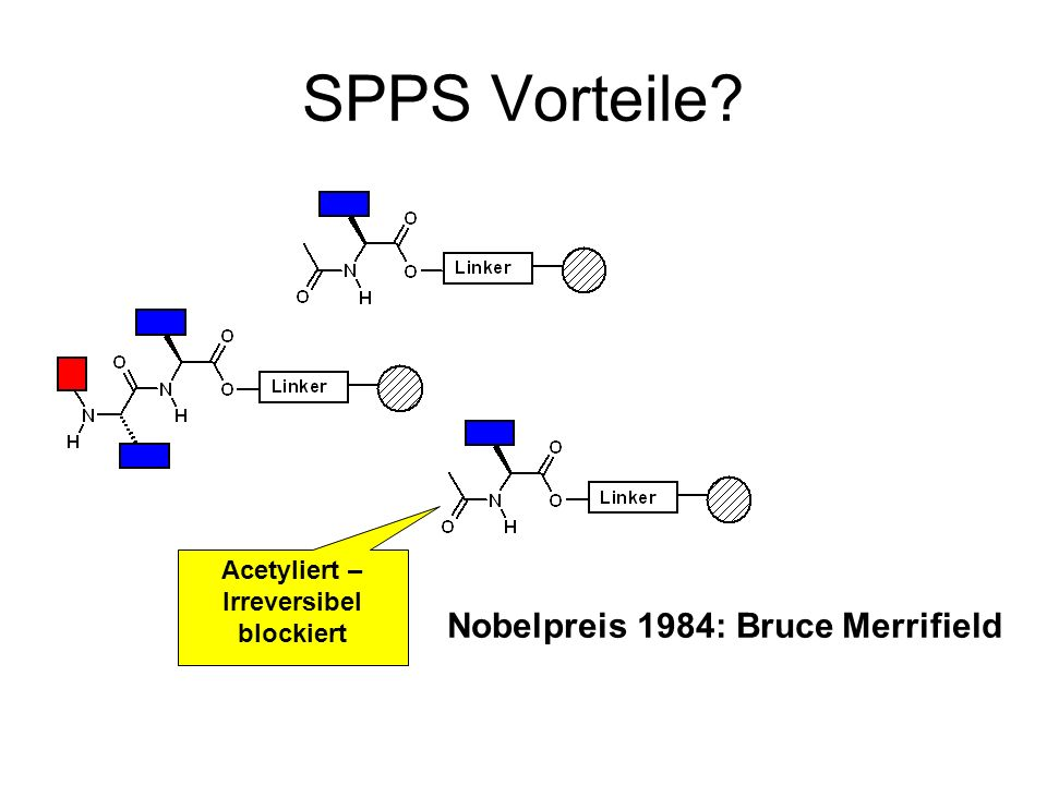 SPPS Vorteile? Acetyliert – Irreversibel blockiert Nobelpreis 1984: Bruce Merrifield