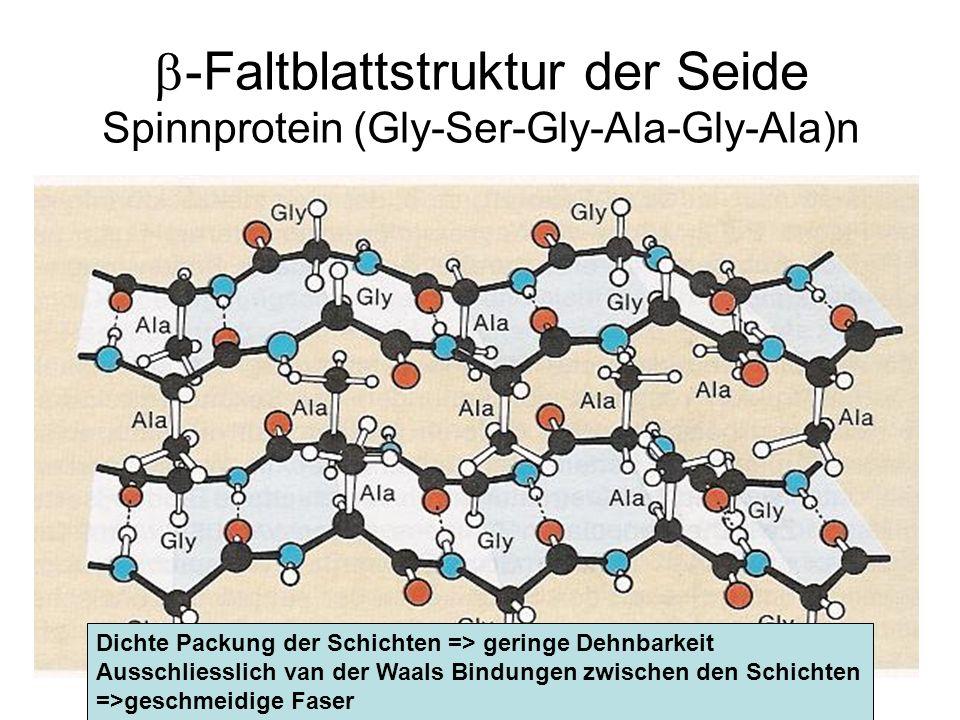 -Faltblattstruktur der Seide Spinnprotein (Gly-Ser-Gly-Ala-Gly-Ala)n Dichte Packung der Schichten => geringe Dehnbarkeit Ausschliesslich van der Waals