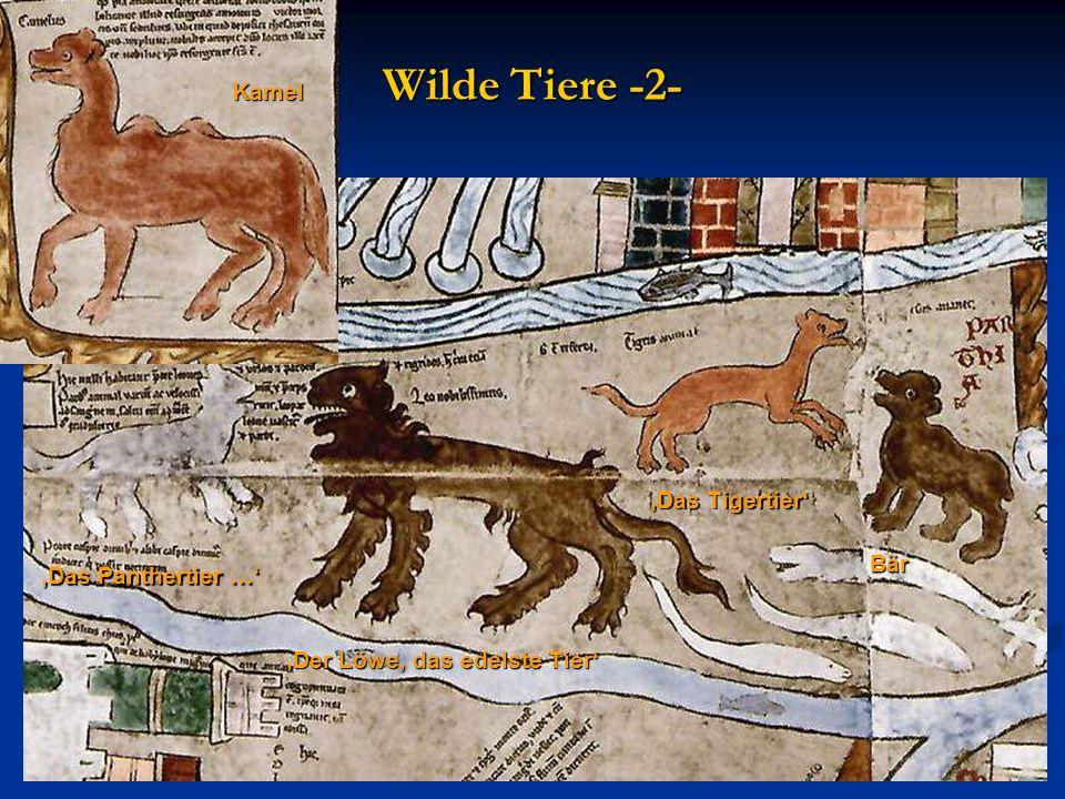 Der Löwe, das edelste Tier Das Tigertier Bär Das Panthertier … Kamel Wilde Tiere -2-