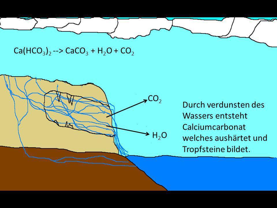 Entstehung von Tropfsteinen Das Calciumhydrogencarbonat Wasser sammelt sich und bildet Tropfen an der Höhlendecke Das Wasser verdunstet Das Calciumhydrogencarbonat zerfällt zu Calciumcarbonat und Kohlensäure Das Calciumcarbonat härtet zu aus Tropfsteinen Die Kohlensäure zerfällt zu Wasser und Kohlendioxid