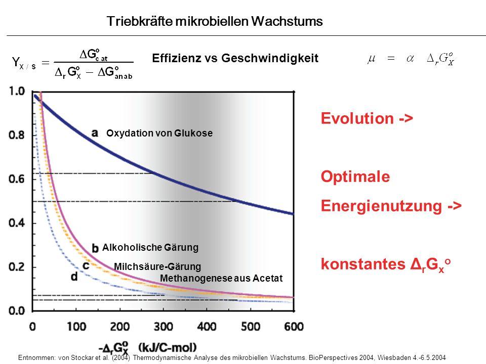 Triebkräfte mikrobiellen Wachstums Effizienz vs Geschwindigkeit Y X/S Oxydation von Glukose Alkoholische Gärung Milchsäure-Gärung Methanogenese aus Ac