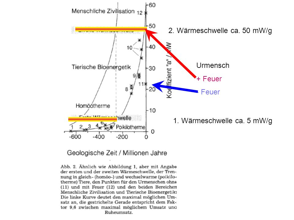 1. Wärmeschwelle ca. 5 mW/g 2. Wärmeschwelle ca. 50 mW/g Urmensch + Feuer - Feuer