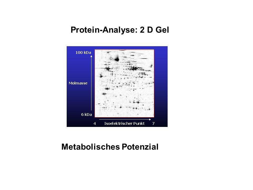 Protein-Analyse: 2 D Gel Metabolisches Potenzial