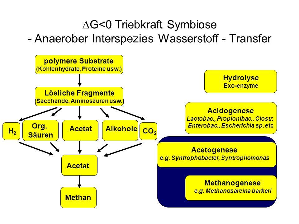 G<0 Triebkraft Symbiose - Anaerober Interspezies Wasserstoff - Transfer polymere Substrate (Kohlenhydrate, Proteine usw.) Lösliche Fragmente (Sacchari